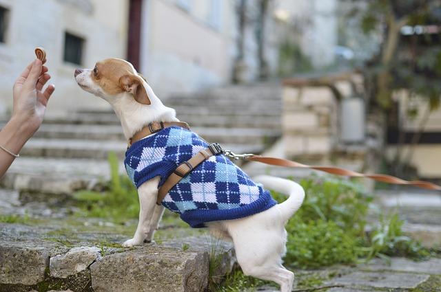 pes ve svetru