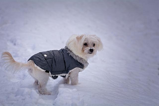 oblečený psík