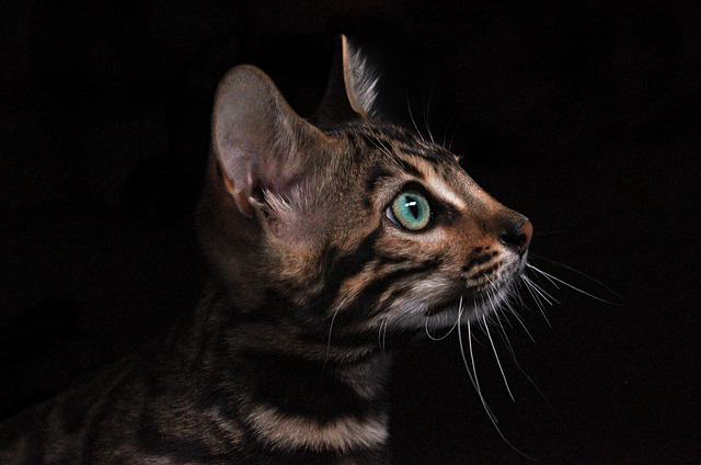 hlavička kočky